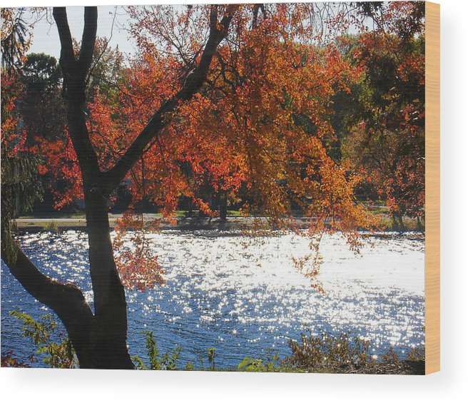 Landscape Wood Print featuring the photograph Lakewood by Steve Karol