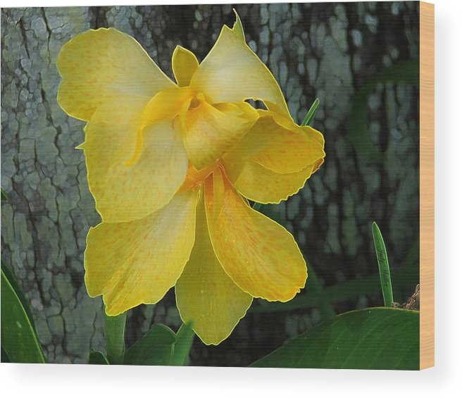 Yellow Wood Print featuring the photograph Lemon Yellow by Judy Waller