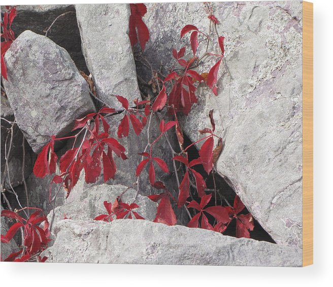 Nature Wood Print featuring the photograph Life On The Rocks by Sylvia Wanty