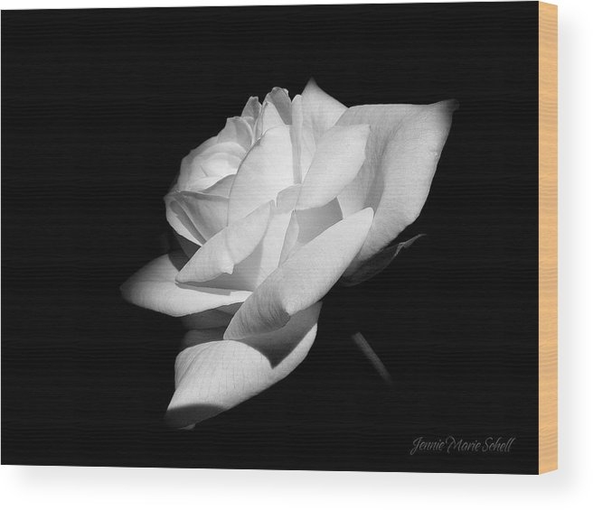 Rose Wood Print featuring the photograph Light On Rose Black And White by Jennie Marie Schell