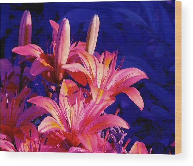 Lily Wood Print featuring the photograph Lillies In Blue by Jim Darnall
