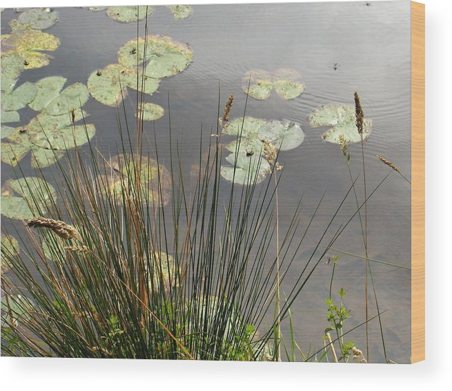 Pond Wood Print featuring the photograph Lily Pond by Denise Lowery