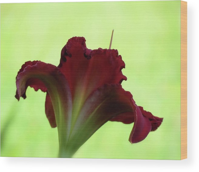 Indy Rhapsody Daylily Wood Print featuring the photograph Lily Red On Green by MTBobbins Photography