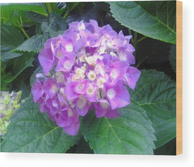 Goddesses Wood Print featuring the photograph Lone Lilac by Tonya Merrick