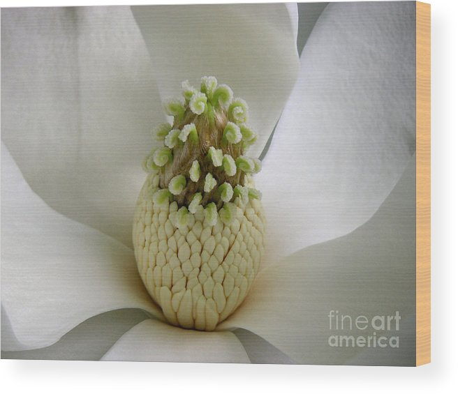 Nature Wood Print featuring the photograph Magnolia Open by Lucyna A M Green