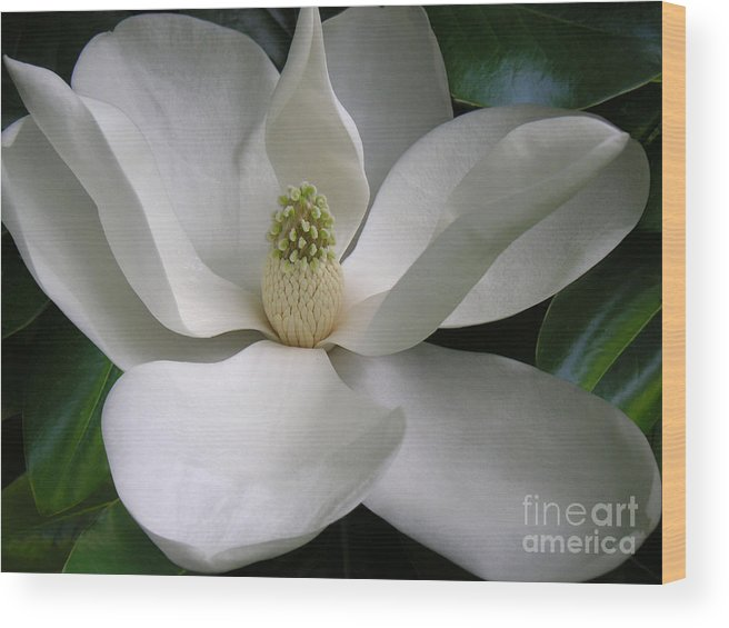 Nature Wood Print featuring the photograph Magnolia Taking In The Light by Lucyna A M Green
