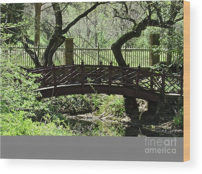Tranquility Wood Print featuring the photograph Meditation by Arden Billings