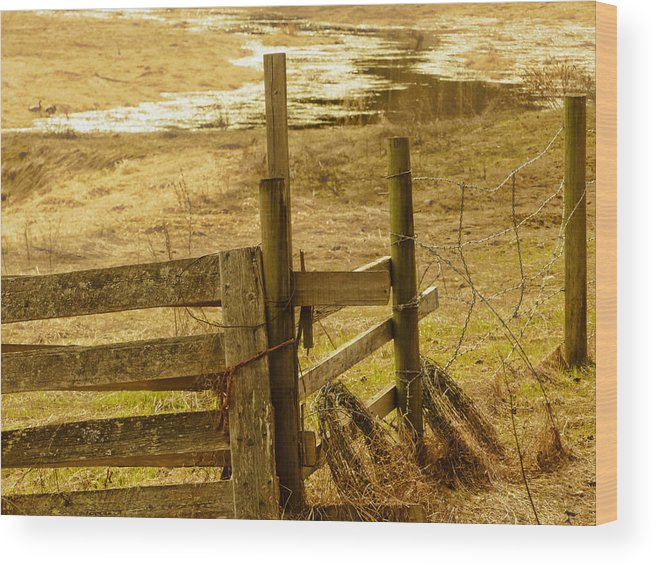 Spring Wood Print featuring the photograph Mending by Scott Ballingall