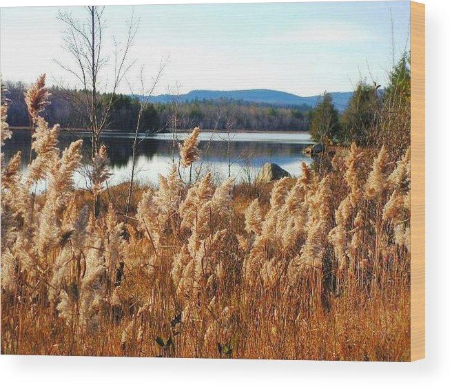 Photography Wood Print featuring the photograph Millinocket Lake by Katina Cote