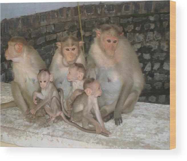 Animal Photos Wood Print featuring the photograph Monkey Family Tiruvannamalai India by Sonya Ki Tomlinson