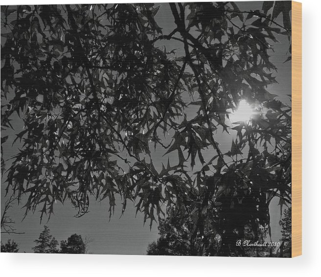 Moon Wood Print featuring the photograph Moonlight by Betty Northcutt