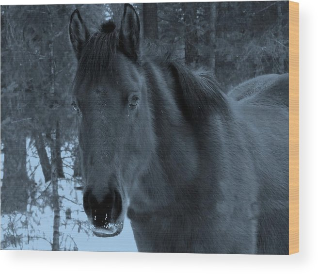 Horse Wood Print featuring the photograph Moonlit Stallion by Tiffany Vest