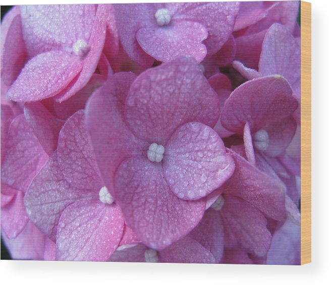 Hydrangea Wood Print featuring the photograph Morning Dew by PJ Cloud
