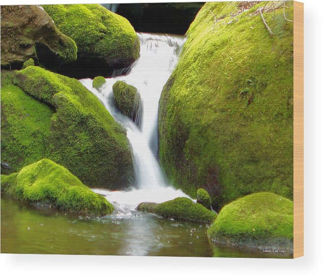 Nature Wood Print featuring the photograph Mossy Falls by Johann Todesengel