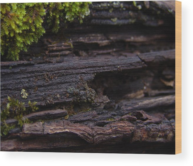 Tree Wood Print featuring the photograph Mossy Tree 001 by Ryan Vaal