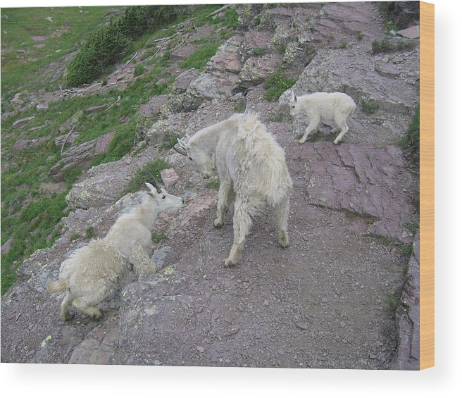 Wood Print featuring the photograph Mountain Goats by Diane Wallace