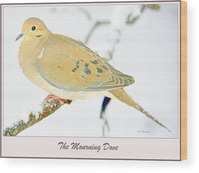 Zenaiada Macroura Wood Print featuring the photograph Mourning Dove In Snow Animal Portrait by A Gurmankin