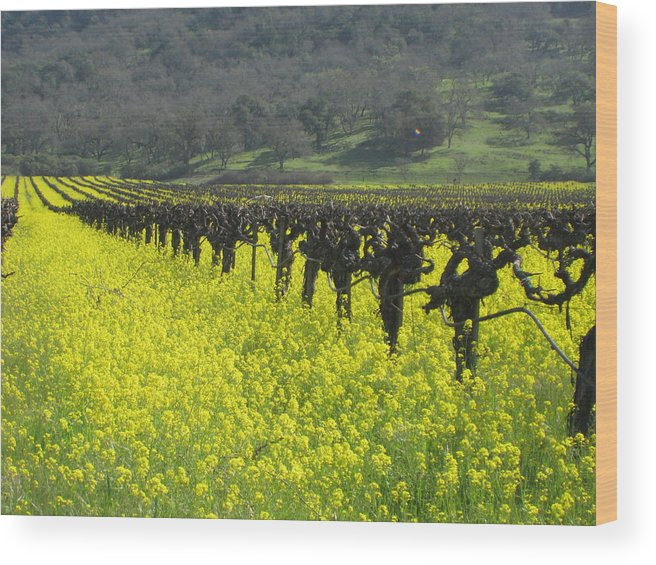 Landscape Wood Print featuring the photograph Mustard Flowers by Kim Pascu