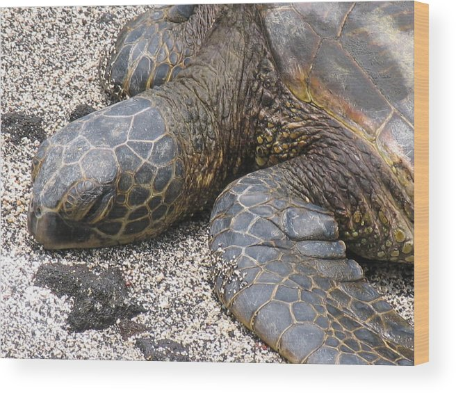 Turtle Sea Turtle Wood Print featuring the photograph Nap Time by Arry Murphey