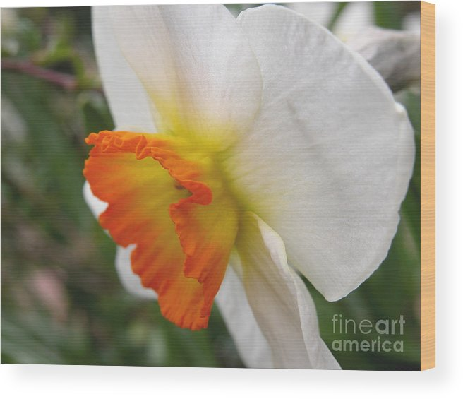 Flower Wood Print featuring the photograph Narcissus II by Michelle Hastings