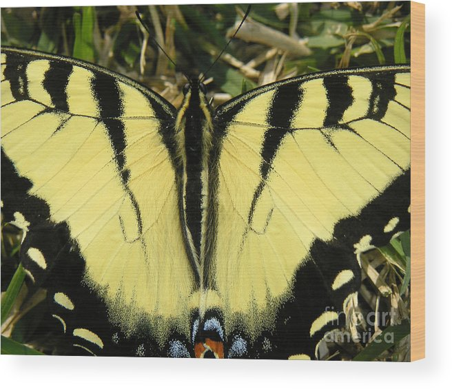 Nature Wood Print featuring the photograph Nature In The Wild - A Natural Painting by Lucyna A M Green