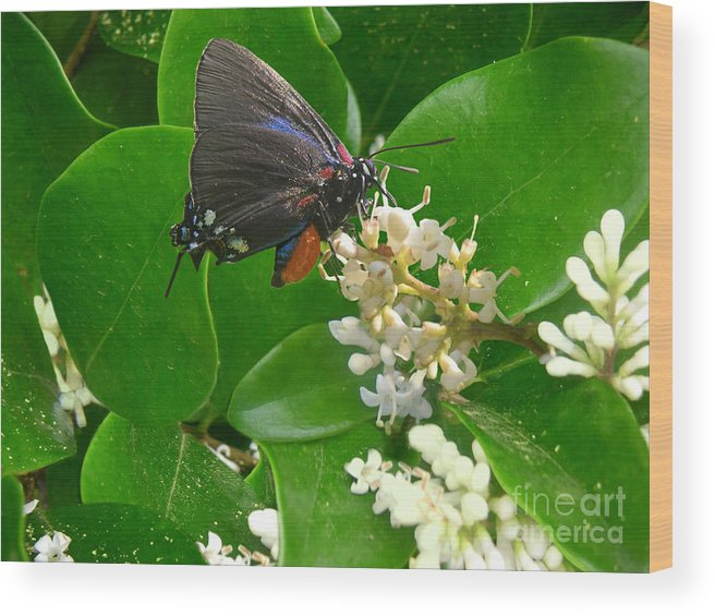 Nature Wood Print featuring the photograph Nature In The Wild - Beautiful In Black by Lucyna A M Green
