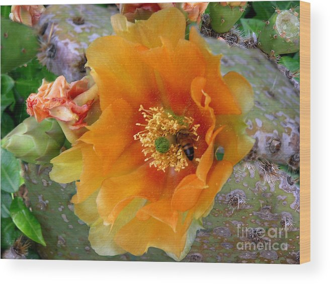 Nature Wood Print featuring the photograph Nature In The Wild - Cactus Honey by Lucyna A M Green