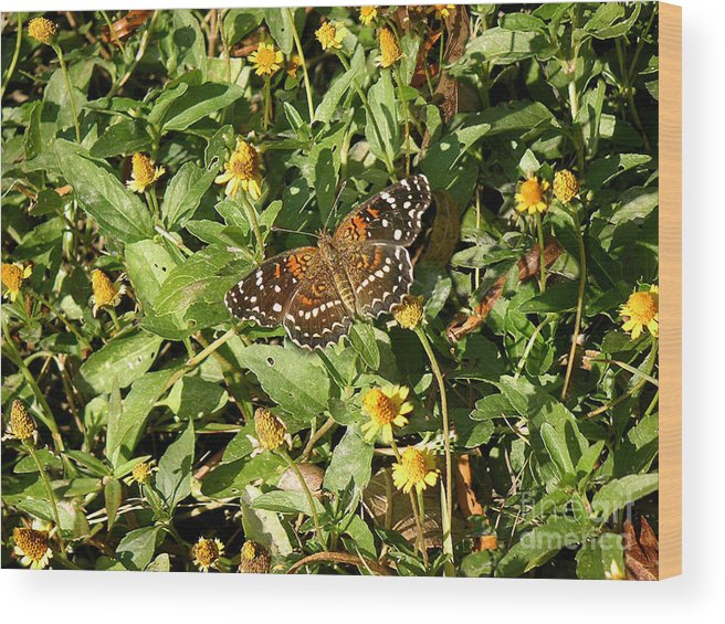 Nature Wood Print featuring the photograph Nature In The Wild - Colors Of Autumn by Lucyna A M Green
