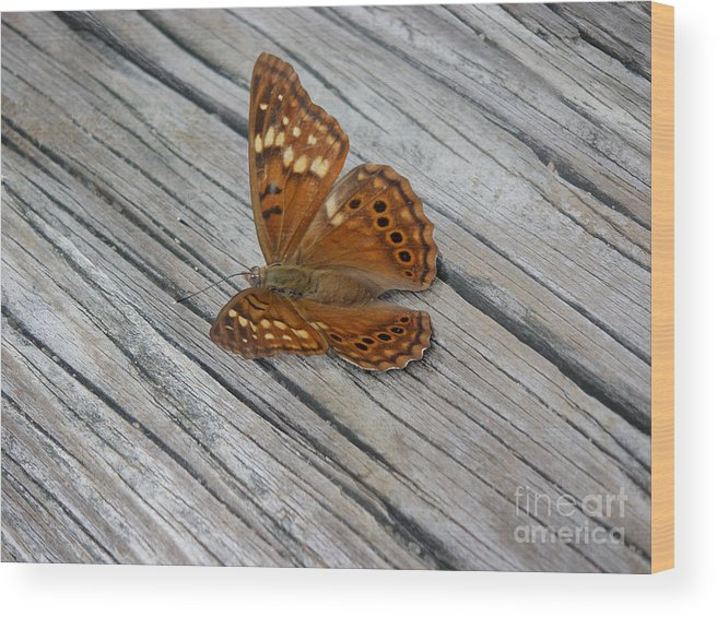 Nature Wood Print featuring the photograph Nature In The Wild - Fall Colors by Lucyna A M Green