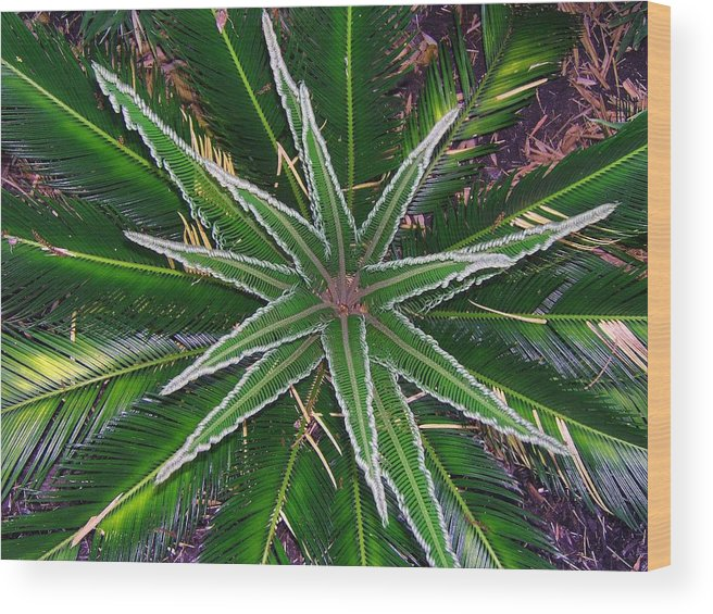 Palm Wood Print featuring the photograph New Palm Leaves by Fred Jinkins