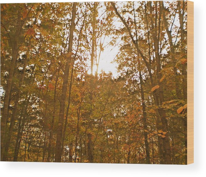 Woods Wood Print featuring the photograph North Carolina Woods by Cat Rondeau