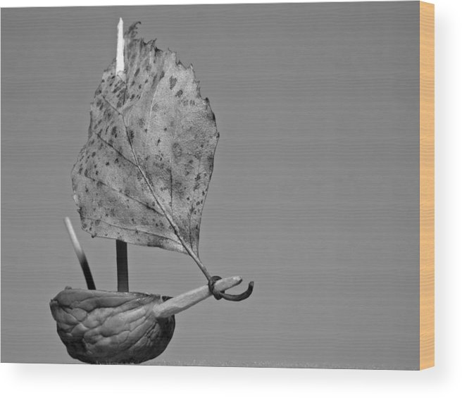 Art Wood Print featuring the photograph nutshell sailboat BW by Shu Fu