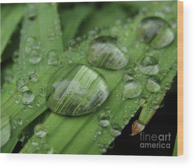 Raindrops Wood Print featuring the photograph Big Drops Of Rain by Kim Tran