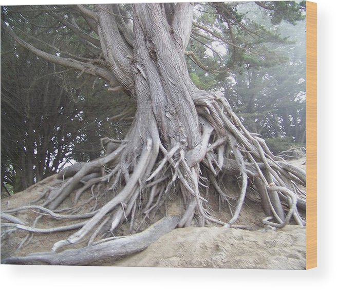 Woodscape Wood Print featuring the photograph Old Wisdon In The Mist by Maggie Cruser