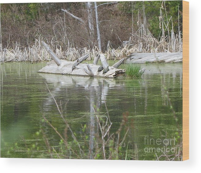 Turtle Wood Print featuring the photograph On The Pond by Juli House