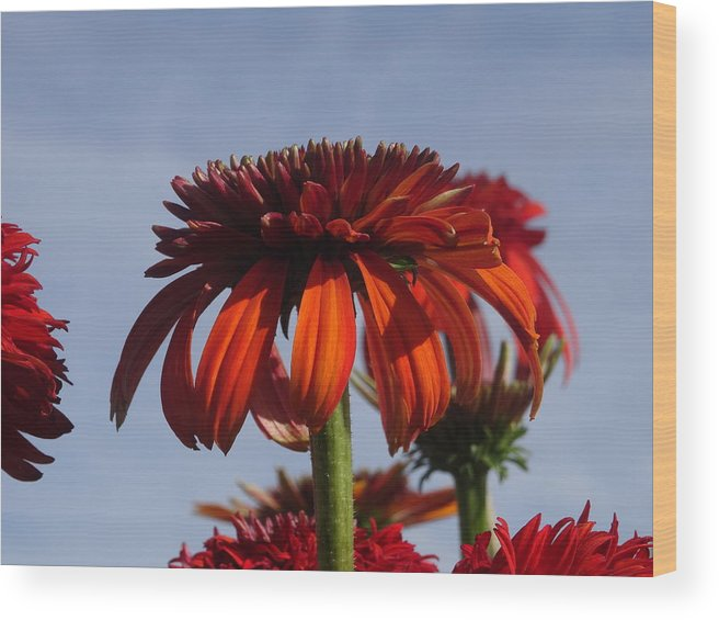 Wood Print featuring the photograph Orange Delight by Marilyn Campbell