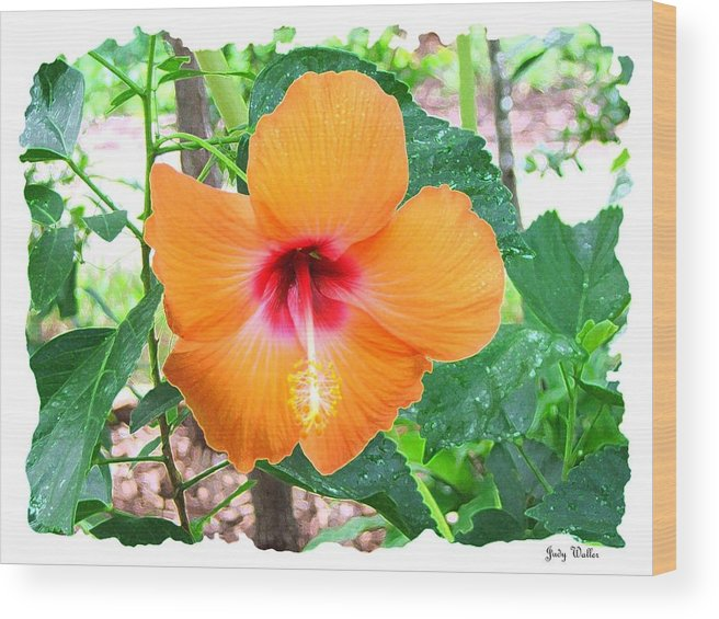 Landscrape Wood Print featuring the photograph Orange Hibiscus by Judy Waller