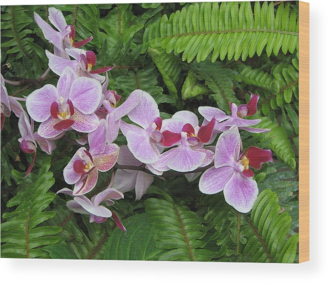 Orchid Wood Print featuring the photograph Orchid 2 by David Dunham