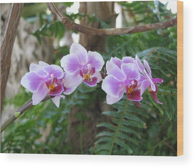 Orchid Wood Print featuring the photograph Orchid 3 by David Dunham