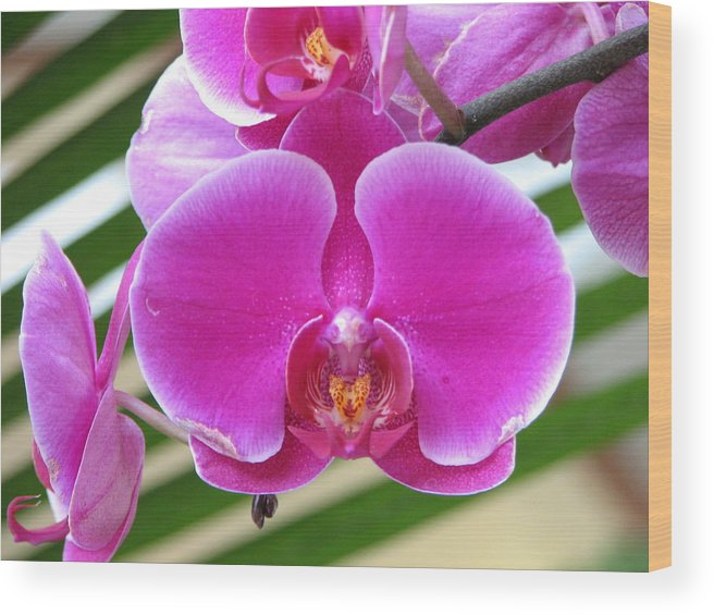 Orchid Wood Print featuring the photograph Orchid 8 by David Dunham