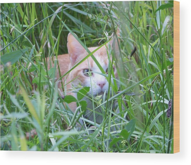 Cats Wood Print featuring the photograph Ozzy by Jessica Burgett