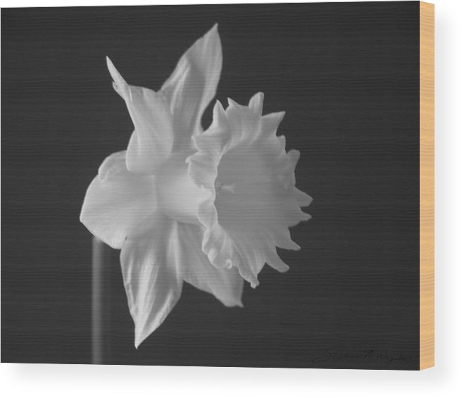 Flowers Wood Print featuring the photograph Pale Remarks by Stephanie Wagenbach