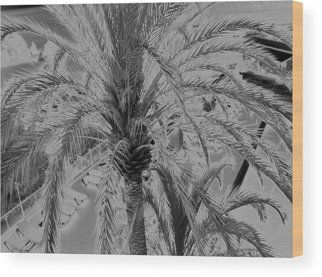 Palm Tree Spain Wood Print featuring the photograph Palm Tree by John Bradburn