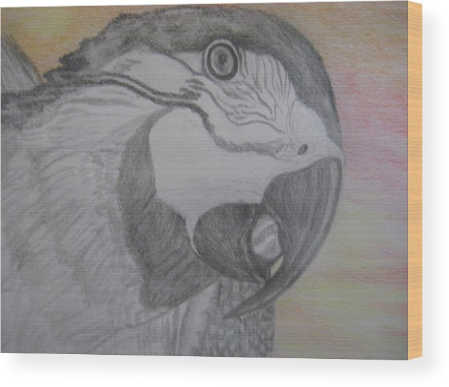 Parrot Wood Print featuring the drawing Parrot by Theodora Dimitrijevic