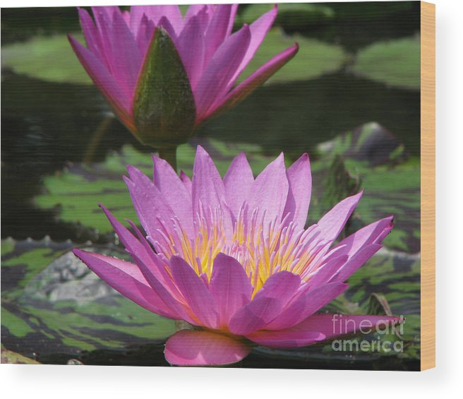 Lillypad Wood Print featuring the photograph Peaceful by Amanda Barcon