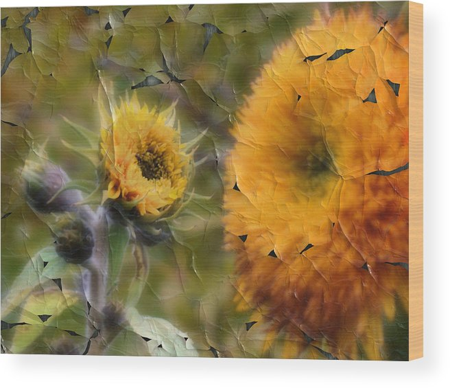 Sunflowers Wood Print featuring the photograph Peeling Away Summer by Tingy Wende