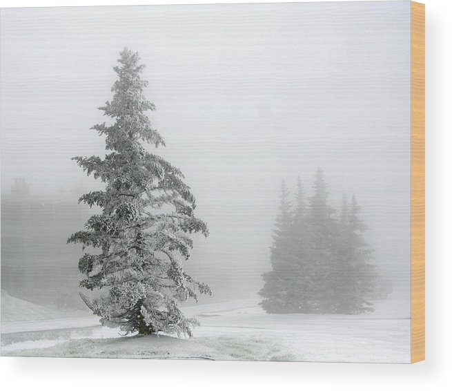 Pine Tree In The Snow Wood Print featuring the photograph Pine In Snow by Gregory Colvin