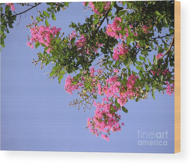 Nature Wood Print featuring the photograph Pink And Blue Canopy by Lucyna A M Green