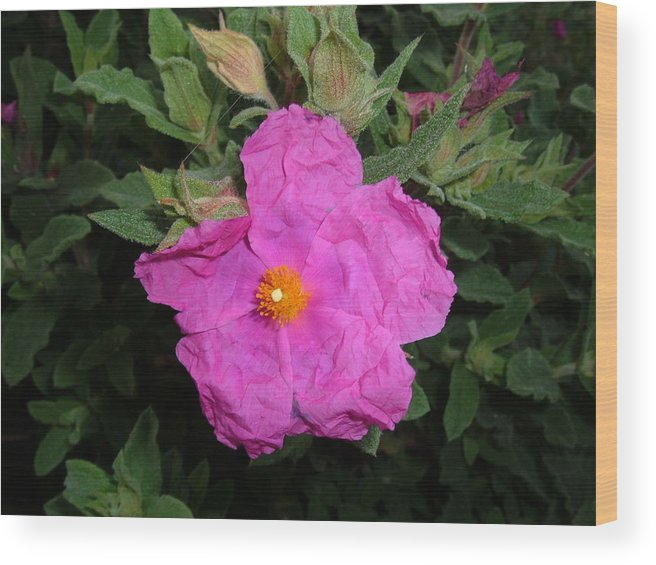Flower Wood Print featuring the photograph Pink Flower by Marsha L Power