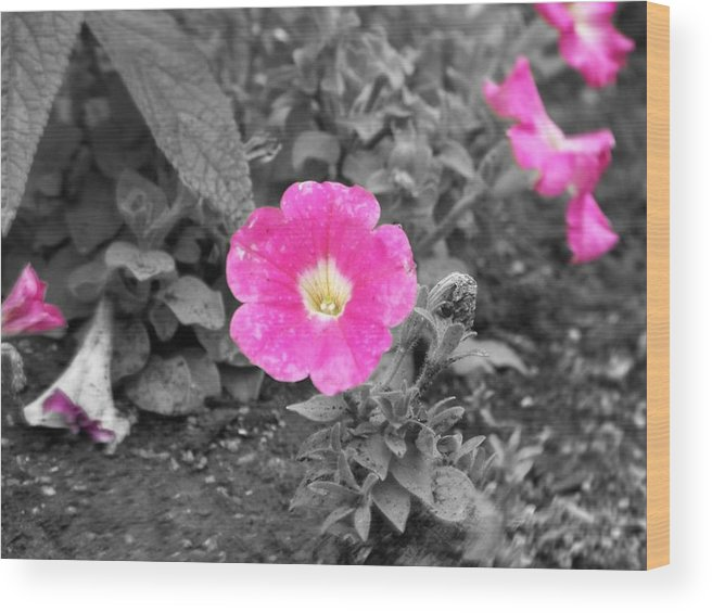 Flowers Wood Print featuring the photograph Pink by Jessica Burgett